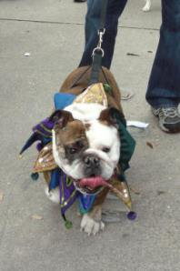 krewe-of-mutts-1