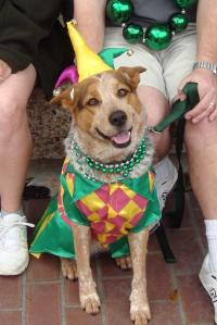 mystic-krewe-of-mutts-parade-1