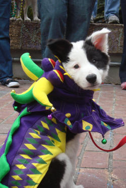 mystic-krewe-of-mutts-parade-3