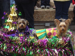 mystic-krewe-of-mutts-parade-52