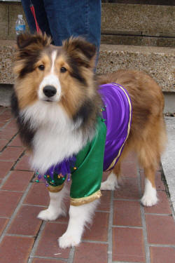 mystic-krewe-of-mutts-parade-63