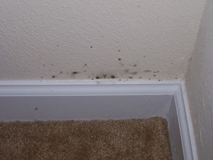 mold growing on wall